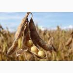 Продам насіння сої, сорт Супра