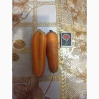 Морковь, морква оптом