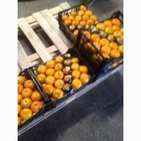 Апельсины, мандарины оптом