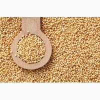 Покупаем зерно амаранта дорого в неограниченном количестве