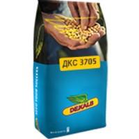 Насіння кукурудзи ДКС3705