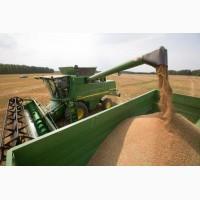 Закупаем зерновые культуры(цены уточняйте)
