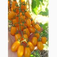Продажа томатов крупным оптом