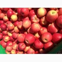 Продам оптом зимові яблука сорт Флоріна, Айдаред, Голден