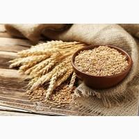 Куплю Пшеницу по Днепропетровской обл с места от 100т