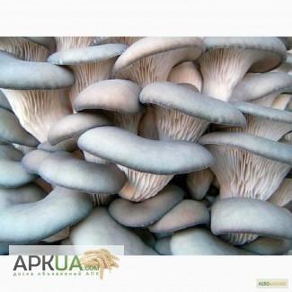 Продаем грибы вешенки оптом и в розницу