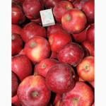 Продам товарные яблоки 150 тонн