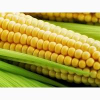 Семена кукурузы дкс 3511 Монсанто