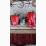 Продам перец сладкий Капля и Антей