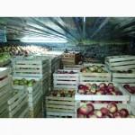 Продам оптом яблоки ИЗ СВОЕГО САДА, отличная цена, первый и высший сорт