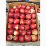 Продам яблука з холодильника газовані