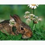 Комбікорма та премікси для кролів