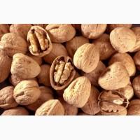 Продаём цельный грецкий орех на экспорт