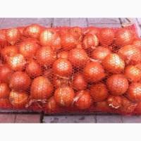 Купим огурцы, томаты, лук, чеснок, в Белоруссии от 20 тонн партия