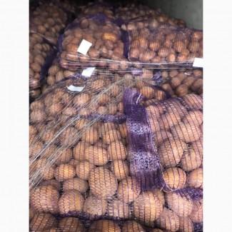 Продам картошку 5+ и посевную картошку, сорта Королева Анна, Бриз, Джили, Гала