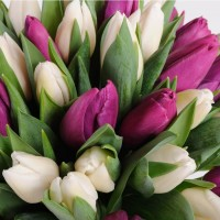 Тюльпани, гіацинти гуртом