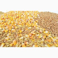 Кукурудза, соя, фуражна пшениця. Закупка
