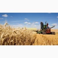 Пшеницу Куплю Кременчуг