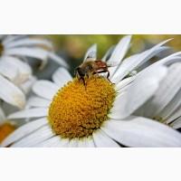Куплю мед дорого Долинський, Устинівський райони Кіровоградськой обл