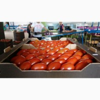 Томат сливка, круглый, черри, ветка. Производитель Ecoinver. Экспорт овощей из Испании