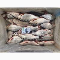 Продам рыбу свежемороженую. Мелкий, средний и крупный ОПТ