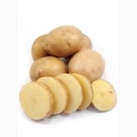Продам семенной картофель разных сортов