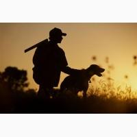 Регистрируем собак с выдачей охотничьего паспорта вся Украина