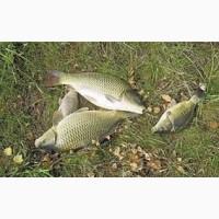 Продом рибу