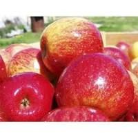 Продам яблука ризних сортив