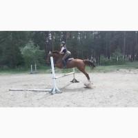 Срочная продажа коня мерина