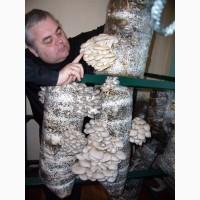Мицелий.Грибы. Вешенка. Одесское общество грибоводов. Выращивание грибов