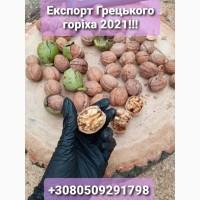 Наше підприємство продає на експорт Грецький горіх у великих об#039;ємах. Калібр 28
