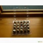 Перепелиные яйца, тушки
