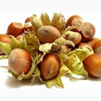Продам лесные орехи