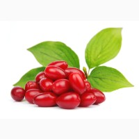 Купить саженцы Кизила, Питомник выращивает саженцы плодовых-ягодных деревьев есть опт