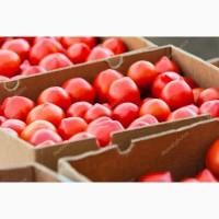 Продажа помидоров оптом на экспорт