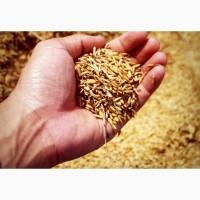 Куплю от 150т Пшеницу на постоянной основе Павлоградский р-н