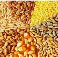 Продажа пшеницы, кукурузы, ячмени