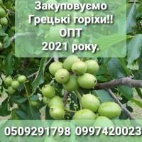 Закупаем со всей Украины Грецкий Орех урожая 2021 года. ОПТ, Полтавская обл