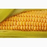 Кукурудза ЕС Москіто