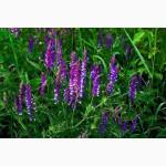 Люцерна та конюшина багаторічні злакові трави