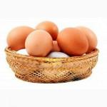 Инкубационное яйцо и Молодняк Брама и Кохинхин