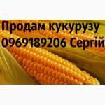 Продам гібриди кукурузи