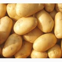 Продам картофель