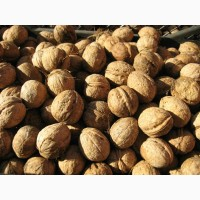 Продам цельный грецкий орех урожая 2017 года. Экспорт 28