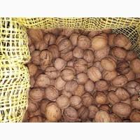 Продам бойный грецкий орех 2017 года