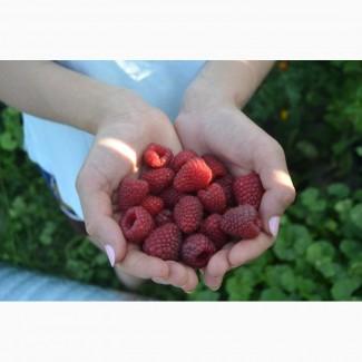 Малина ( ягода ) охолодженна