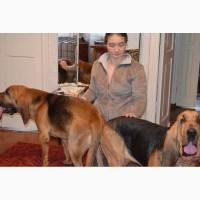 Помощь при вязке для крупных и мелких собак. Срочный выезд инструктора кинолога, Харьков