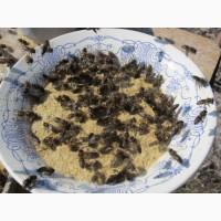 Мука из сои для пчел (обезжиренная)