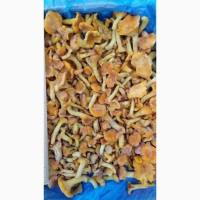 Продам заморожені гриби лисичка